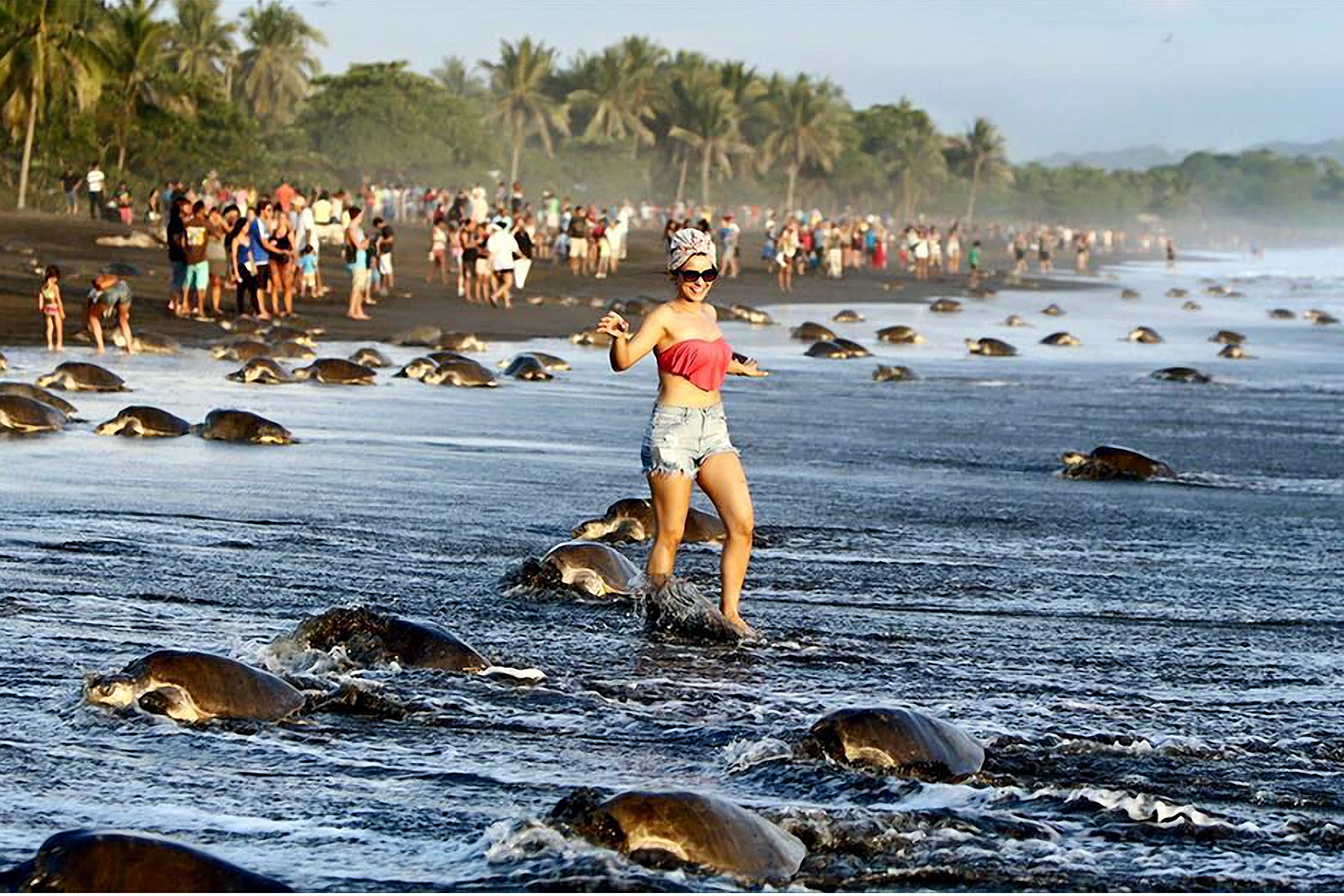 Turtle tourism clearly has reached its tipping point.