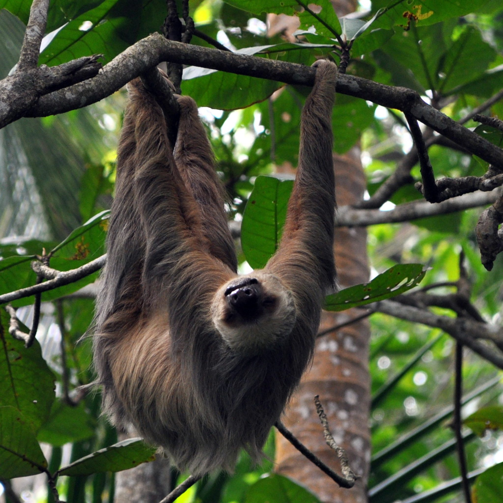 Costa Rica is blessed with stunning natural beauty and an incredible array of wildlife.