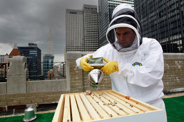 Look out for a hive at your next hotel—the buzzy trend keeps on growing.