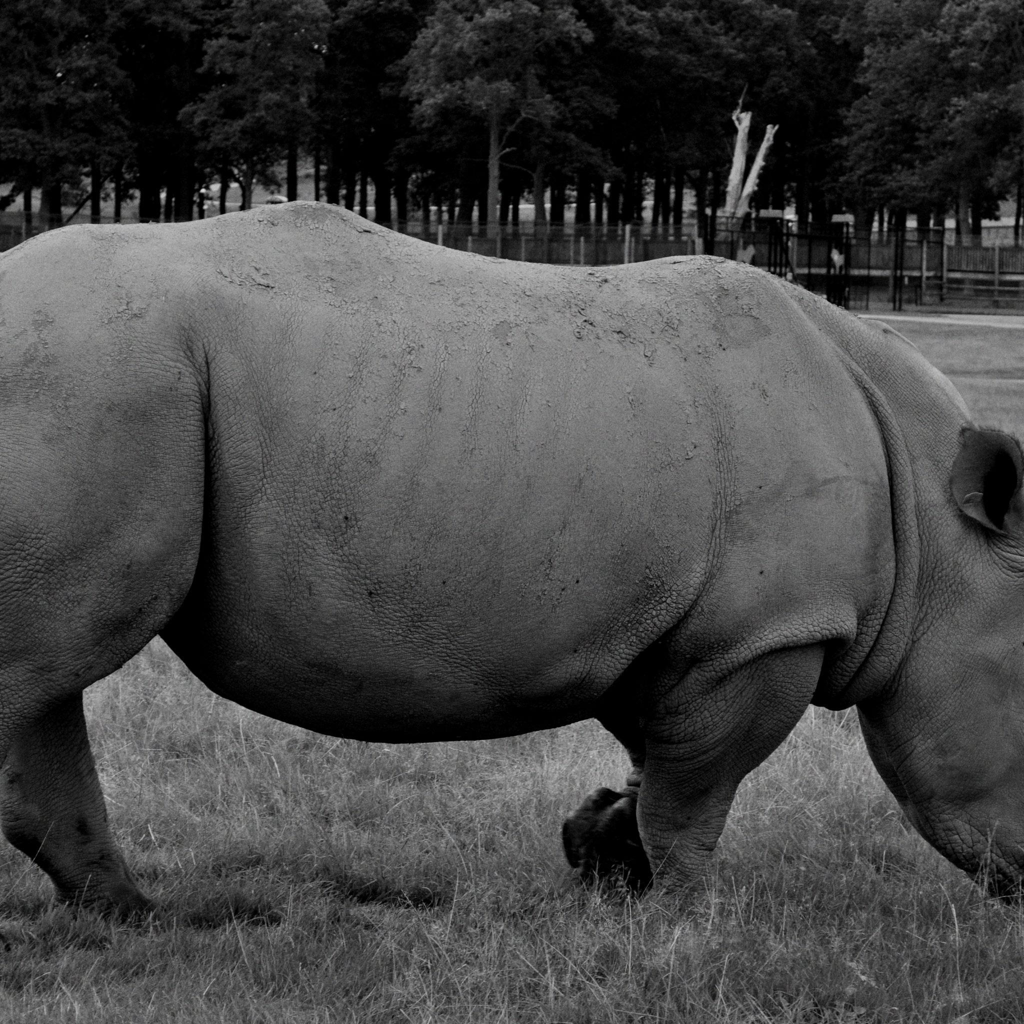 Zoos can protect a rhino from poachers, but in exchange for protection the rhino loses its habitat.