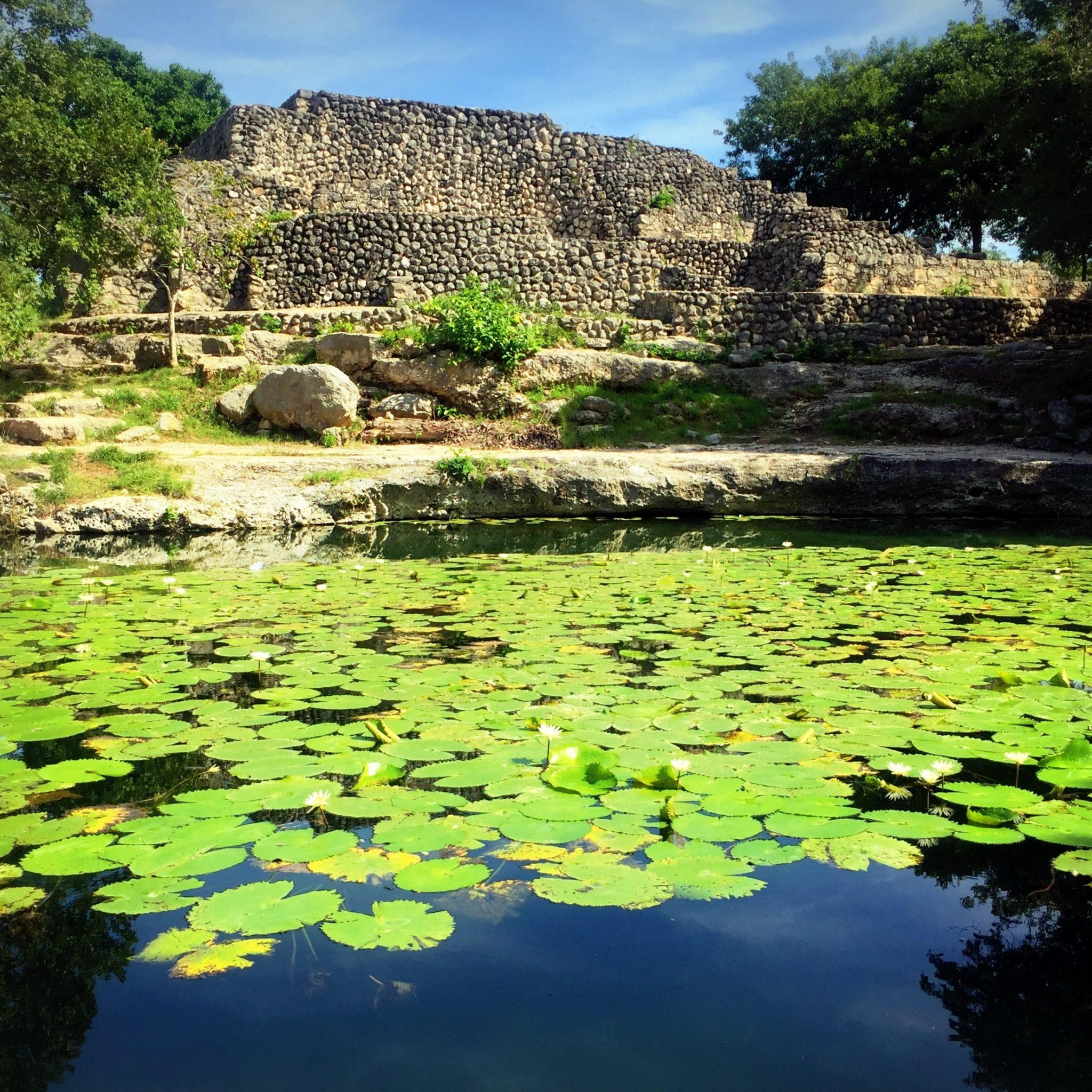 Swim among the waterlilies at Dzibilchaltún's cenotes.
