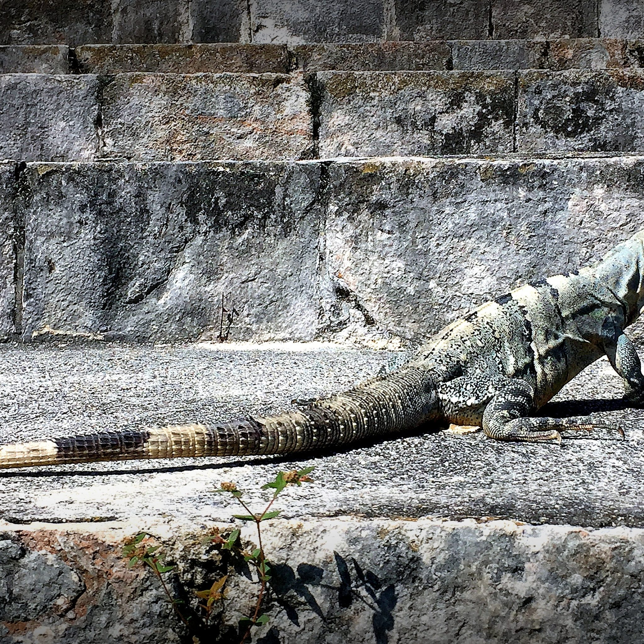 You will likely have the place almost all to yourself, save for countless iguanas.