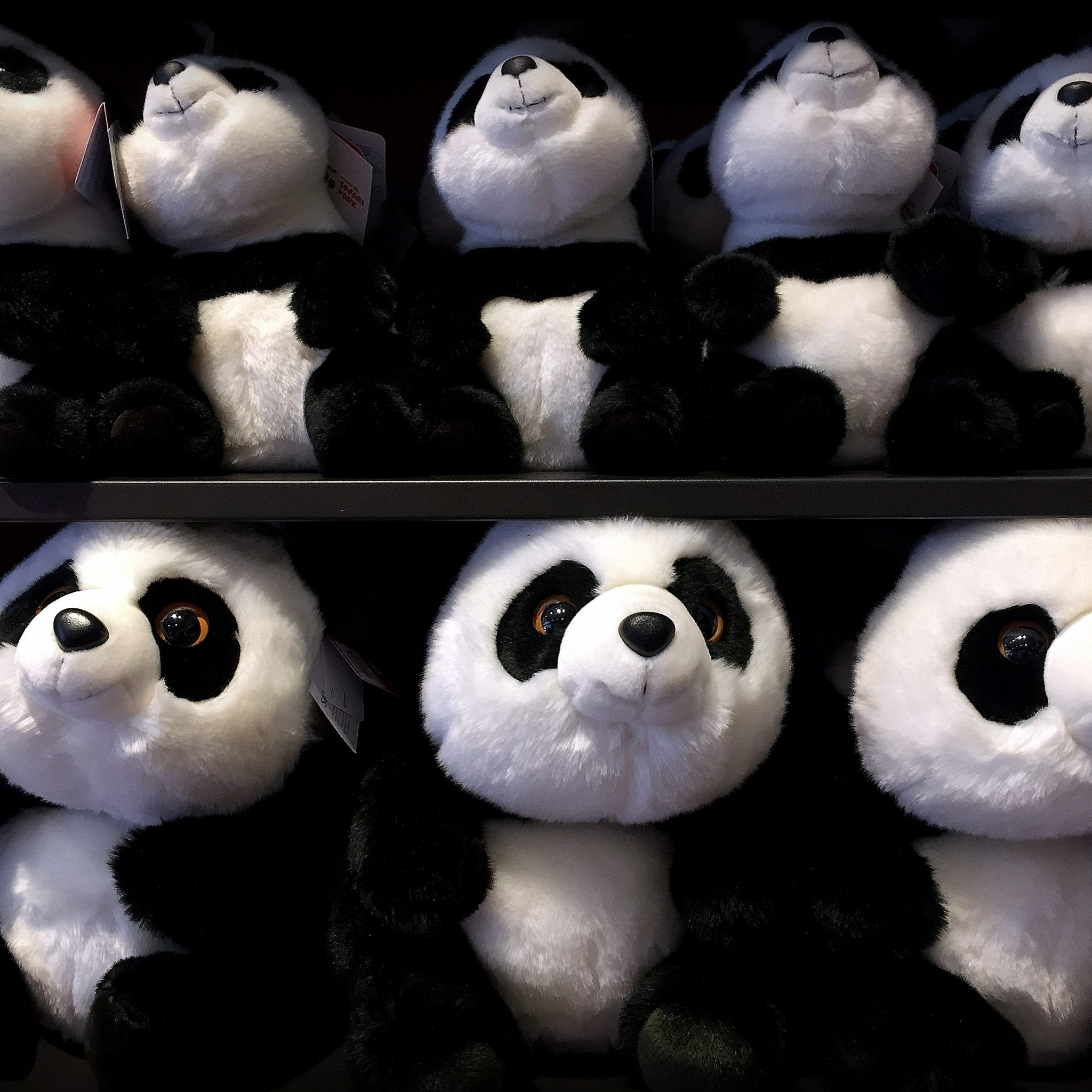 Buy one, save one. San Diego Zoo gift shop actively supports their panda conservation work.