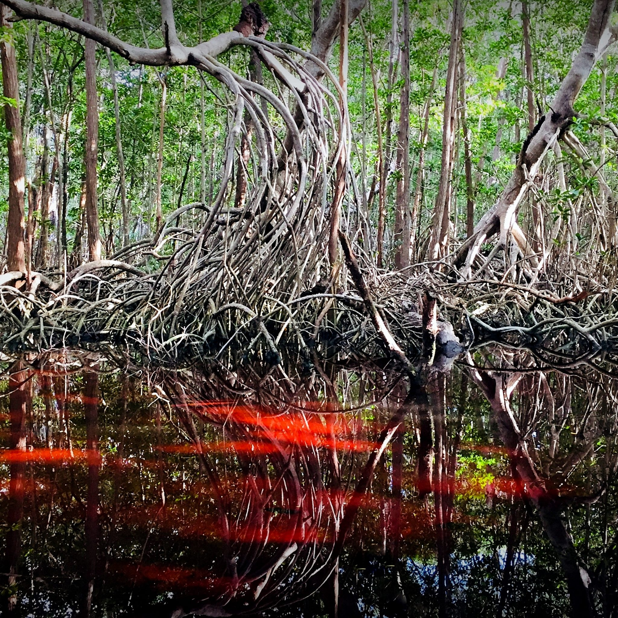 Take a boat ride through the mangroves for an unforgettable wildlife spotting experience.